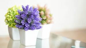 plant flower stock today 160223 tease c12932c0051975df81ee44601e8e31db jpg