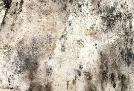 black mold on concrete walls mold on concrete walls s on the walls moldy photo by black mold on concrete walls