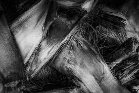 How To Create Compelling Black And White Texture Photography