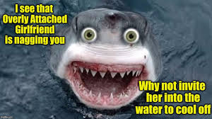overly attached shark ii for shark week raydog and discovery channel event