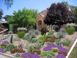 Small Picture Best 25 South texas landscaping ideas on Pinterest Lemongrass