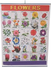 Flower Chart Craftwafts Flower Rolling Chart 24x20inch Photographic