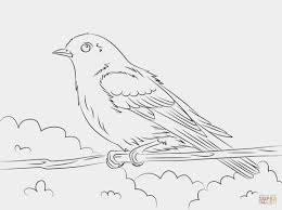 Eastern Bluebird Sagebrush Coloring Pages Print Coloring