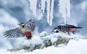 Winter Time Birds Cold Cute Birds Free ...