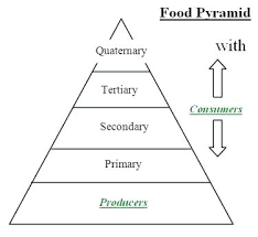 Blank Pyramid Diagram Blank Food Pyramid Worksheets Odmartlifestyle Com