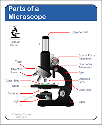 Parts Of The Microscope Huge Collection Of Parts Of A Microscope Drawing Download More