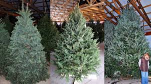 Typically we offer multiple varieties of fresh pre-cut Christmas trees in  our covered barns (which means you can pick out your tree in comfort even  during ...