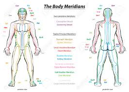 Meridian System Chart Male Body With Principal And Centerline