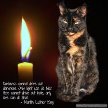 Light Quote Sunday Quotes Light and Love The Conscious Cat 70