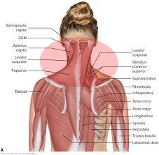See more ideas about back pain, spine health, spine problems. What Are The Causes Of Muscle Spasming In The Neck