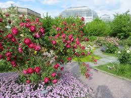 average american flower size national garden native plant recommendations united states botanic