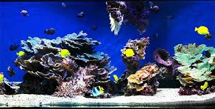 Image result for recommended aquarium cleaning