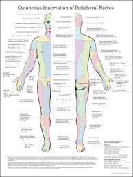Chiropractic Charts And Posters