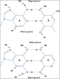 Hydrogen Bonds In Protein Dna Complexes Where Geometry