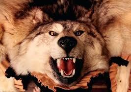 wolf skin rug taxidermy wolf skin rug by via faux wolf skin rug