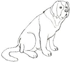 realistic dog drawing step by step. Fine Drawing Drawing A Dog Step 5 And Realistic Dog Step By D