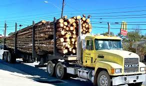 Camioane Forestiere Transport Busteni   UtilajeForestiere.com