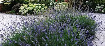 breeze garden design london based in