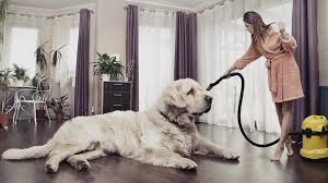 best vacuum for dog hair on hardwood floors