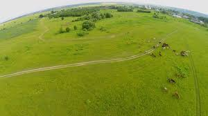 grass field aerial. Horses Graze On Grass Field Near Village At Summer Day. Aerial View Stock Video Footage - VideoBlocks
