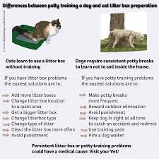 difference between dogs and cats that can help in a multi species  difference between dogs and cats dog potty training problems cat litter box