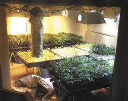500 Pot 1 Police Raid Plants journal Vegas Las Finds Review 1AygqWTxXw