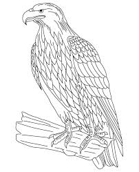bald eagle template simple eagle drawing eagle template simple bald eagle drawing