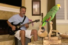 Watch a <b>Parrot</b> Sing Along With Led Zeppelin, Van Halen and More