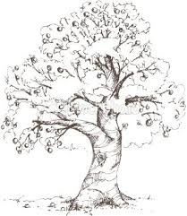 realistic apple tree drawing. Plain Apple Apple Tree Sketch Throughout Realistic Drawing W