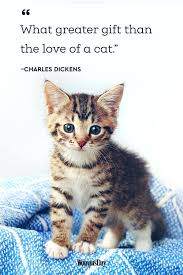 Funny Quotes About Pet Cats Warsawspeaksmobilecom