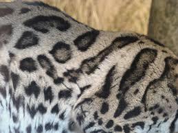 Cat Fur Patterns