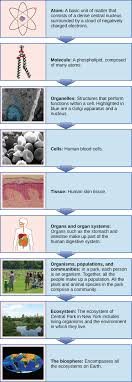 Big Ideas In Biology Chart Answers 1 1 Themes And Concepts Of Biology Concepts Of Biology