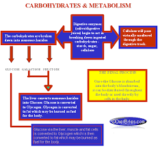 Carbohydrate Metabolism Chart Diet Carb Chart Carbohydrate Breakdown Carbohydrate Chart