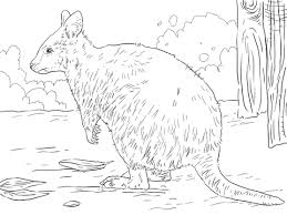 Small Picture Quokka coloring pages Free Coloring Pages