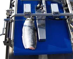fish scoring machine for automated essay scoring e raterreg v 2 attali the journal