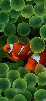 Fish wallpaper iphone ...