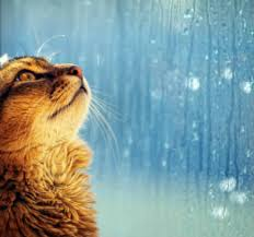 in the rain essay cat in the rain essay