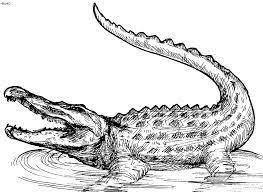 crocodile drawing for kids. Unique Crocodile Crocodile Drawings For Kids  Google Search For Crocodile Drawing Kids R