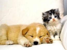 cute kittens and puppies wallpaper. Simple Kittens Not Just Things But Amazing Stuff  Please Do Follow My Blog To Get  Some Lovely Cool Stuff See Cute Kittens And Puppies Wallpaper Collection Inside Cute Kittens And Puppies Wallpaper M