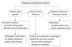 Blood Count Chart For Anemia Pernicious Anemia New Insights From A Gastroenterological