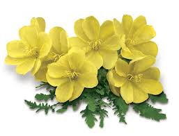 flower vs oil