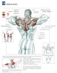 54 Best Fitness Anatomical Charts Images In 2019 Fitness