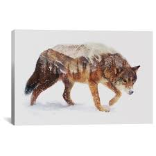 Arctic <b>Wolf</b> By Andreas Lie <b>Canvas Print</b> : Target