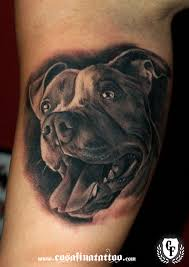Pit Bull Sugar Skull Yahoo Image Search Results Tattoo