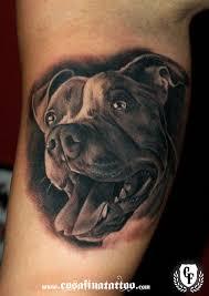 Pit Bull Sugar Skull Yahoo Image Search Results Tattoos Dog