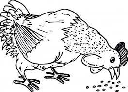 Kippen Kip Aan Het Eten Kleurplaten