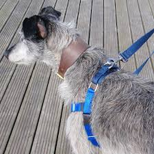 2 Hounds Harness Size Chart 2 Hounds Freedom No Pull Harness
