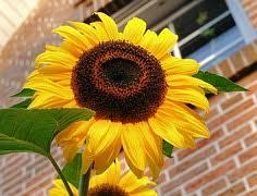 Sommergedichte Gedichte Und Sprüche Zum Sommer