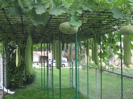 Kitchen Garden In India Home Vegetable Garden India Home Garden