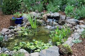 simple instructions for introducing fish including goldfish and koi to a backyard garden pond plus tips